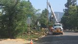 Fallen tree causes power outages in Grants Pass