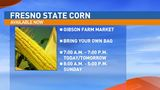 It's time for Fresno State Sweet Corn