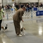 Dog trainers from across the country travel to Albany show