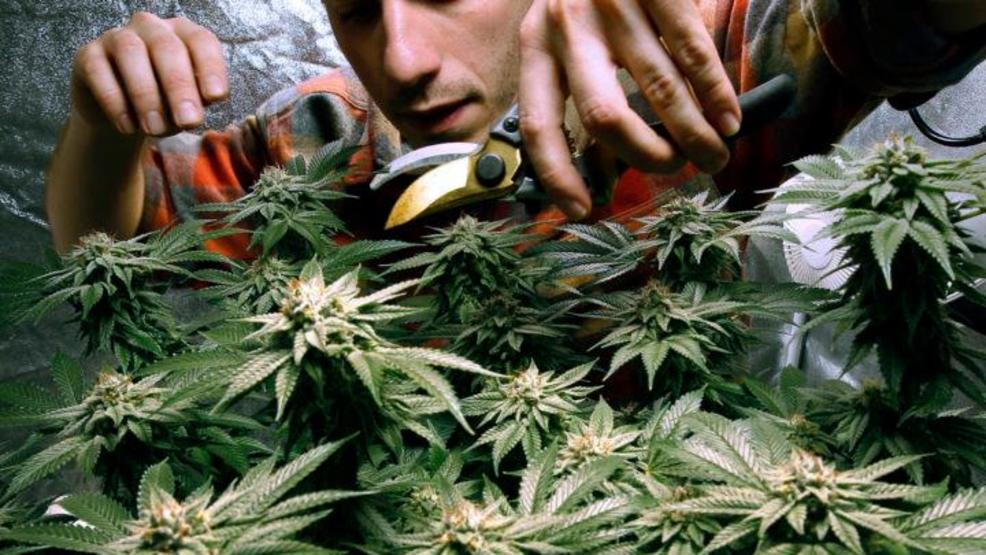 Maine just signed a deal for a 'seed-to-sale' marijuana tracking system