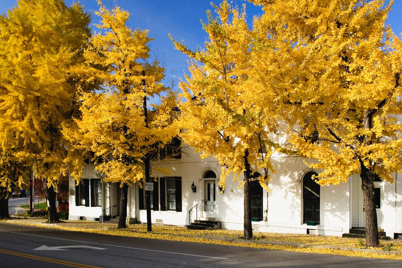 PLACE: Cynthiana, KY / DISTANCE: 57 miles south of Cincinnati, a little over one-hour drive / Fall is one of the best times to visit Cynthiana, Kentucky as leaves from the city's gingko trees turn a distinctive yellow and offer a striking contrast to the city's mid-19th century cast-iron storefront buildings. / Image courtesy of the Kentucky Department of Tourism // Published: 10.19.19