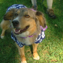 "Spring Grove Cemetery hosts annual ""Dog Day of Summer"""
