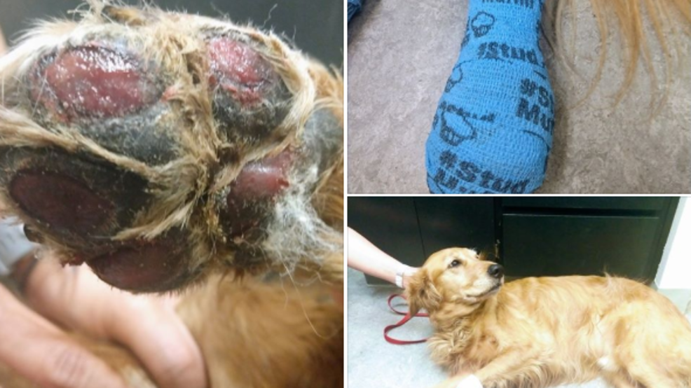Image result for Vet issues summer walk warning after treating dog with burned off paw pads