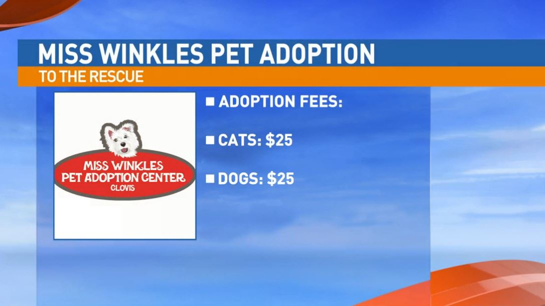 All pet adoption fees at Miss Winkles Pet Adoption are just $25