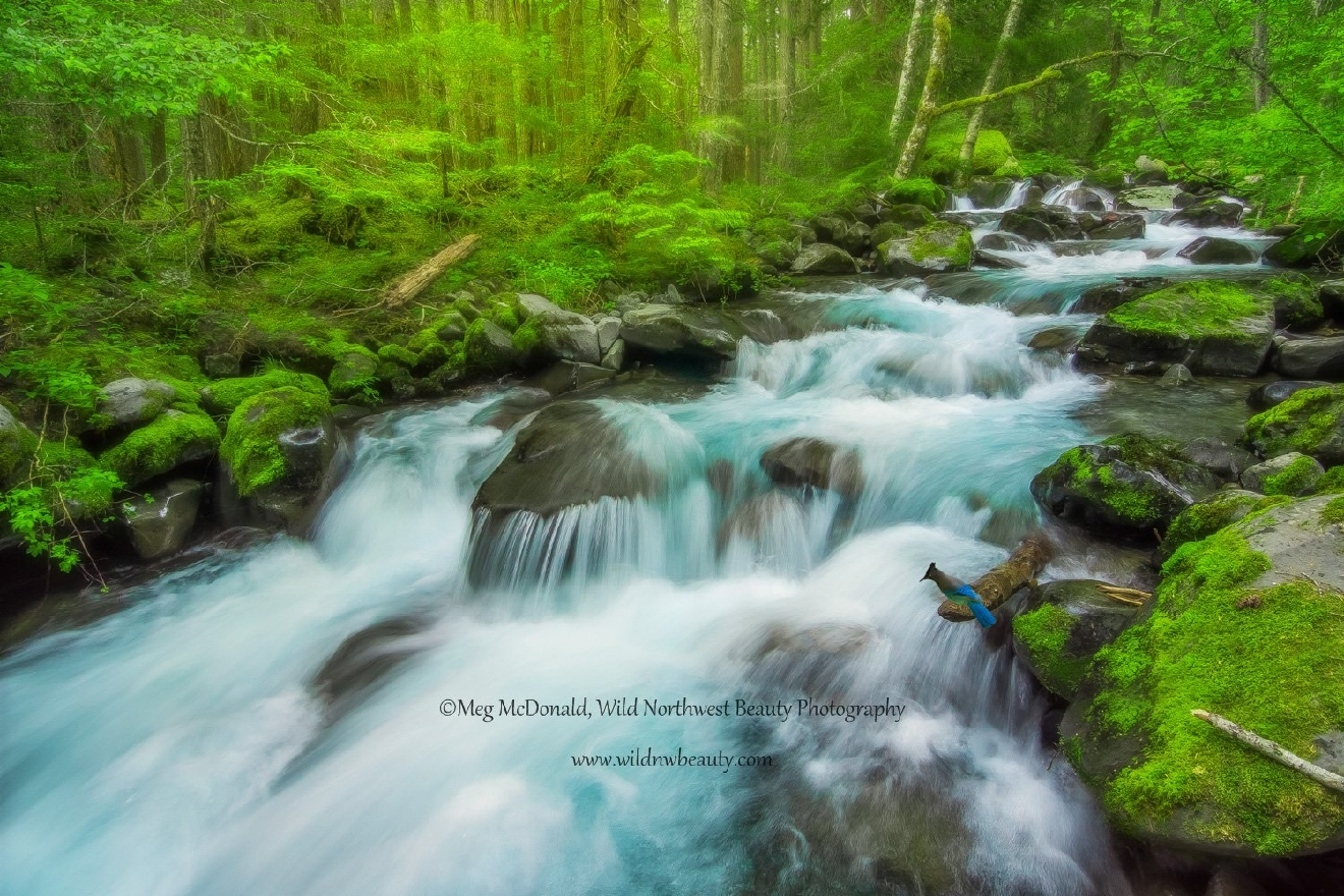 Wild Northwest Beauty Photography