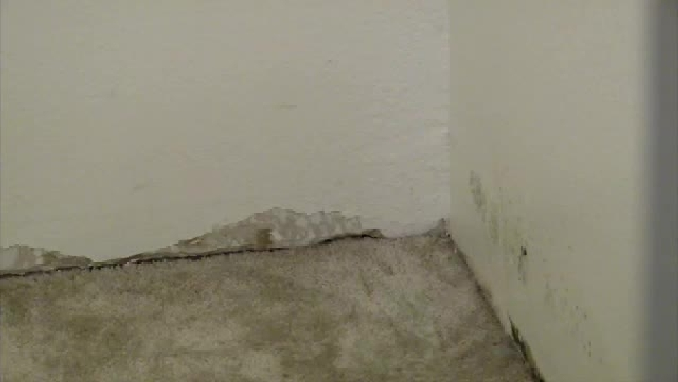 Landlord refuses to fix water leak and mold in apartment | KDBC