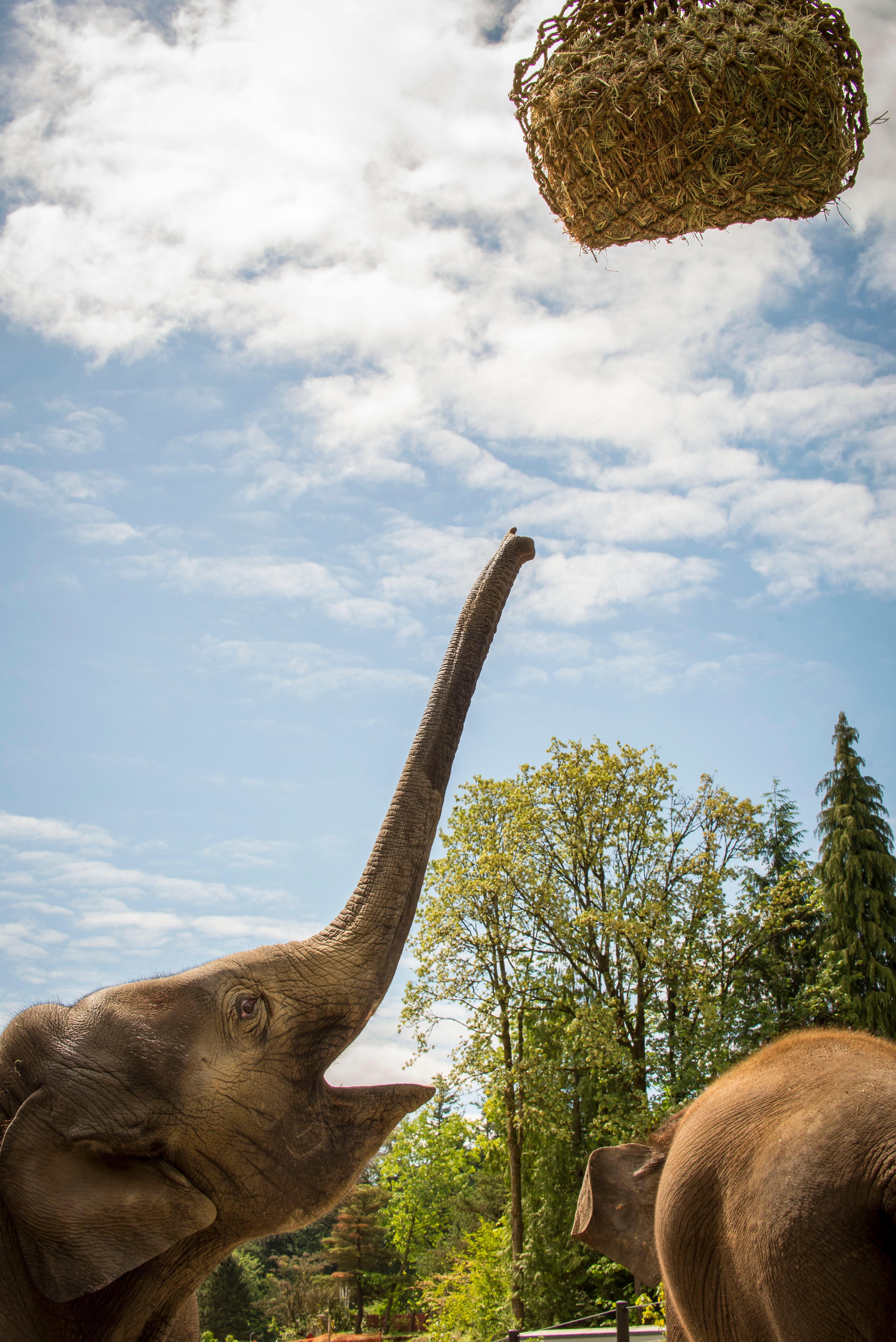 Oregon Zoo: Elephant Lands At Oregon Zoo Opens To Pachyderms, People