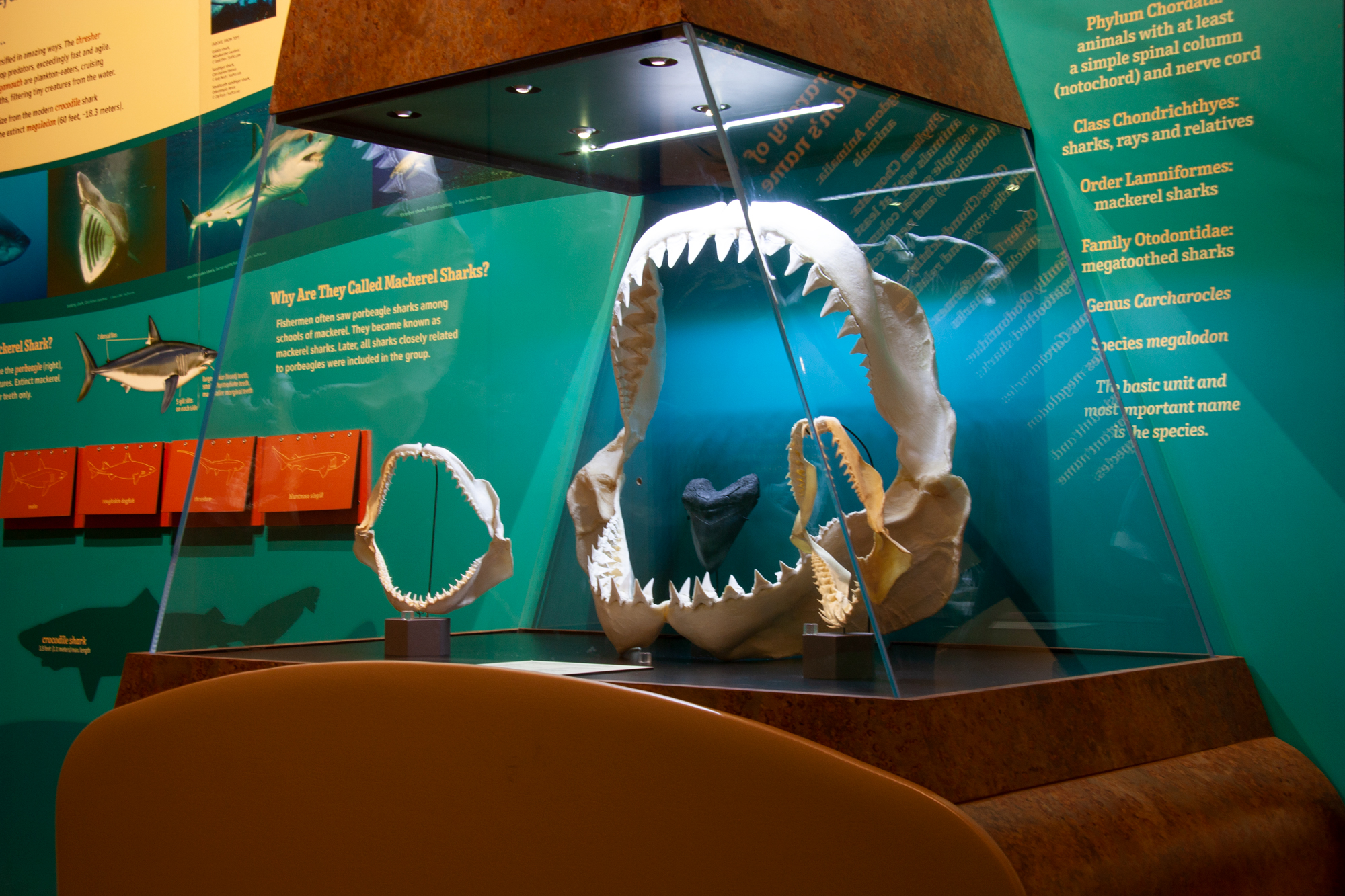 The Sam Noble Oklahoma Museum of Natural History is located on the University of Oklahoma Norman campus. (SNOMoNH)