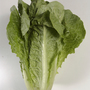 First case of E. coli linked to romaine lettuce recall reported in Oregon
