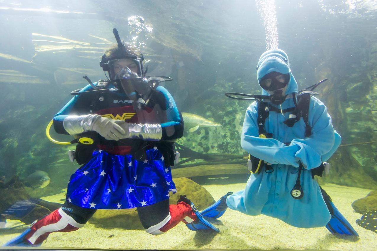 Scuba divers entertaining guests at the Newport Aquarium's Nauti Nite (10.5.18) / Image: Mike Bresnen Photography // / Image: // Published: 10.31.18