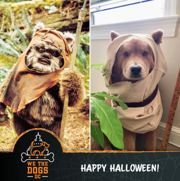 IMAGE: IG user @kingstonbudz / POST:{ }Happy Howl-oween!