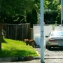 Photo shows cougar prowling neighborhood; schools send out notice
