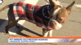 Experts urge pet owners to bring animals inside when temperatures drop