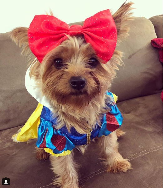 Over the seven jewelled hills, beyond the seventh fall, in the cottage of the Seven Dwarfs, dwells Snow White, fairest of them all. (Image: via IG user @sammyk_the_yorkie)