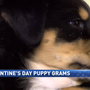 Valentine puppies spread love around Reno-Sparks