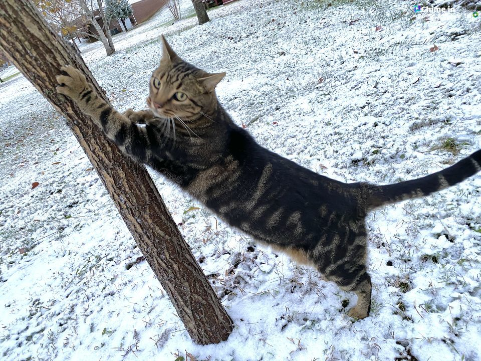 Buddy the Cat enjoys the snow in Athens. From viewer from Rhonda Price.