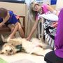 Meet Sprout: A therapy dog and best friend to local children's hospital patients