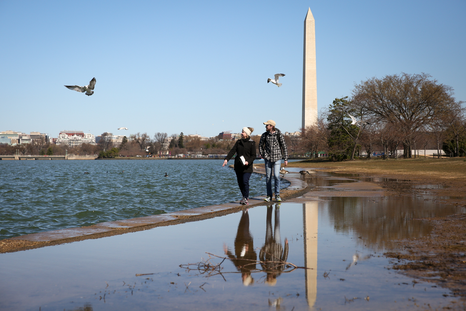 The National Park Service has announced that this year's cherry blossoms will reach peak bloom April 3-6.{ }The best time to visit the trees on the Tidal Basin is 4-7 days after peak. (Image: Amanda Andrade-Rhoades/ DC Refined)