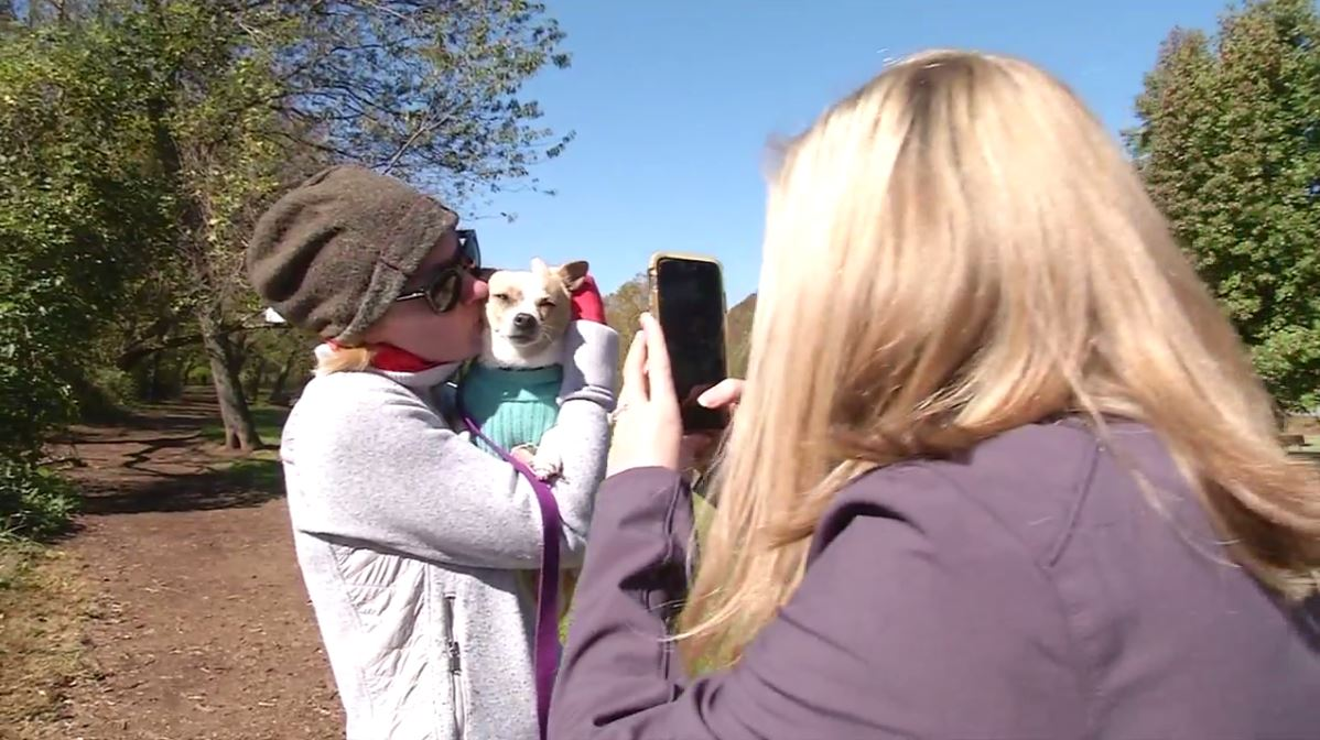 Miss Butterworth's weight loss journey, documented on Asheville Humane Society's Facebook page, has earned her a celebrity status around town. (Photo credit: WLOS Staff)