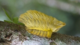 Wildlife photographer discovers 'Trump' caterpillar that could be dangerous
