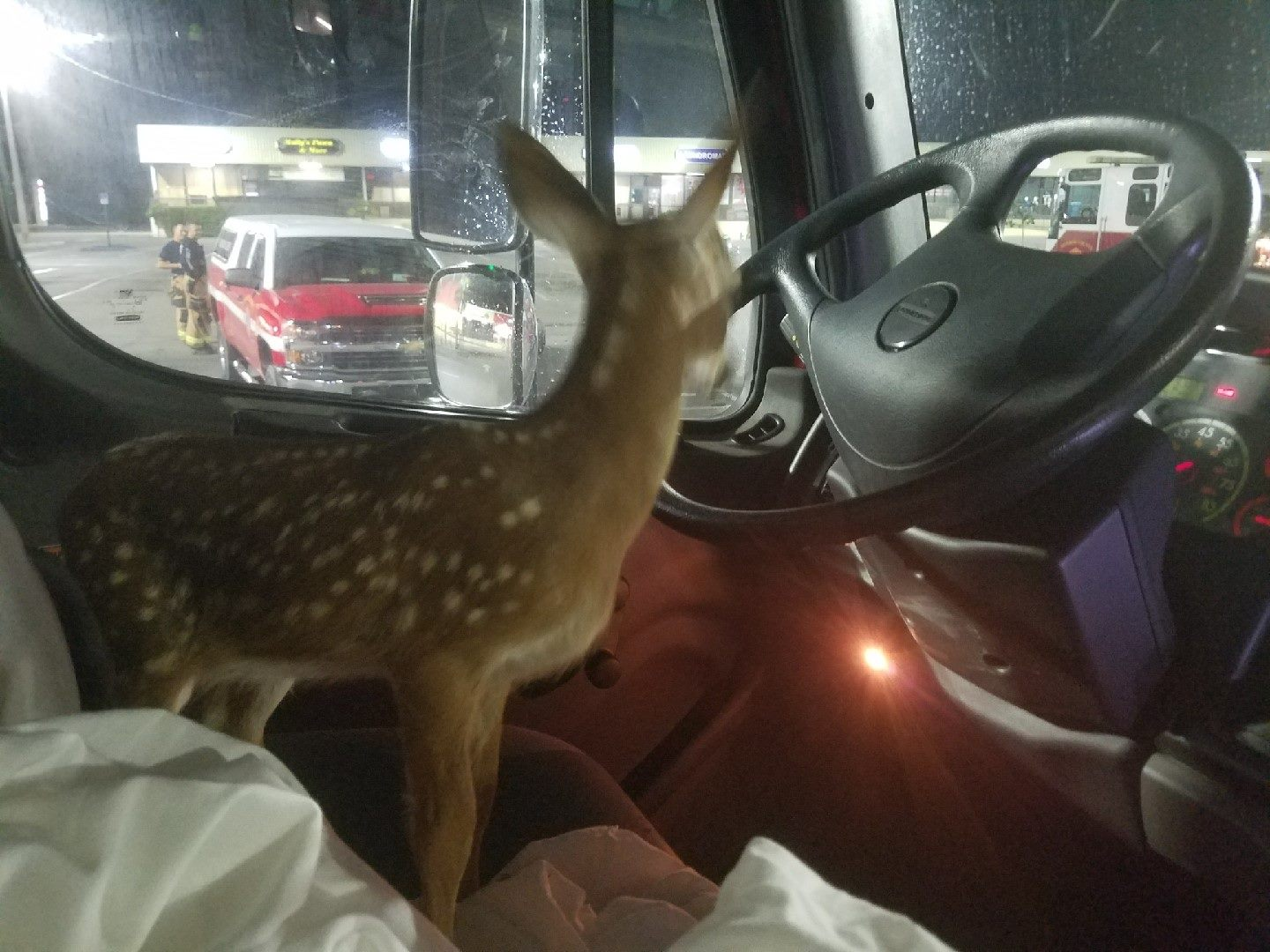 Baby deer rescued from brush fire. (MCFD)