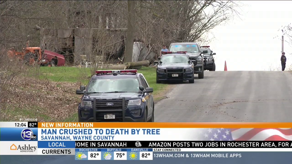 Report: Man crushed to death by tree in Savannah | WHAM