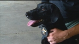 Franklin County's new weapon to fight child predators: Ruger the K9