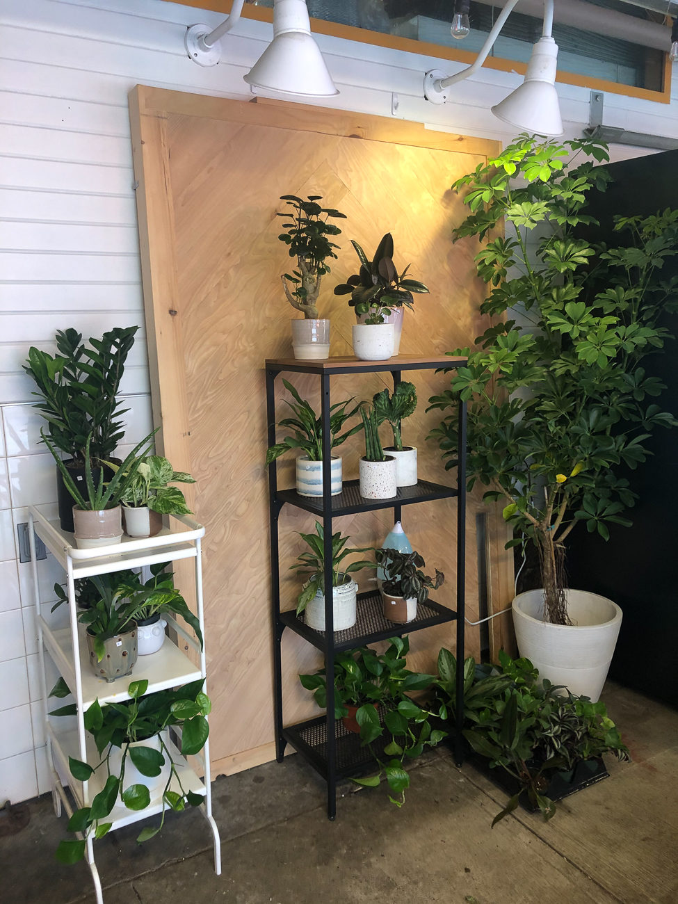 "Yuliya S. Bui (IG: @giaandtheblooms) from Mt. Auburn / ""I own Gia and the Blooms plant store, and my house is a refuge for plants that haven't been doing well in the shop. Once they've become part of the family and I found a perfect spot for them on one of many plant shelves in my house, there is no going back."" BUSINESS: Gia and the Blooms at 114 E. 13th Street in Over-the-Rhine / Image courtesy of Yuliya S. Bui // Published: 6.13.20"